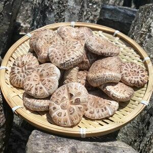 【ふるさと納税】原木栽培 乾燥しいたけ「源流」どんこ 150g