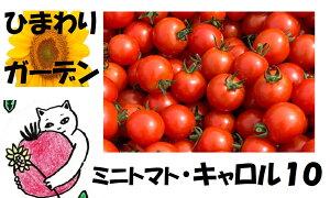 【ふるさと納税】ひまわりガーデンのミニトマト/キャロル10【3kg】