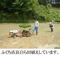 【ふるさと納税】新登場の高級米岩手県奥州市産金色の風白米玄米可10kg