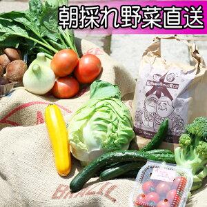 【ふるさと納税】 ◆産直 松の実◆ 農産物 詰め合わせ 岩手県 雫石町 野菜 果物 産地直送 送料無料 U-005