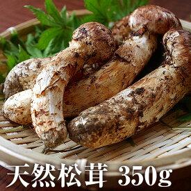 【ふるさと納税】天然松茸 約350g