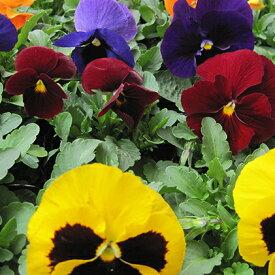 【ふるさと納税】仙台季節の花便り 3種24株 【花】