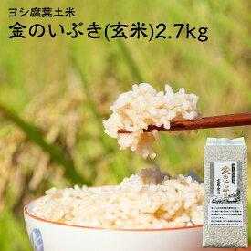 【ふるさと納税】新米・令和3年産 ヨシ腐葉土米 金のいぶき(玄米)2.7kg