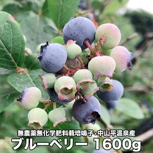 【ふるさと納税】無農薬無化学肥料栽培鳴子・中山平温泉産ブルーベリー1600g