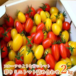 【ふるさと納税】彩りミニトマト詰め合わせ