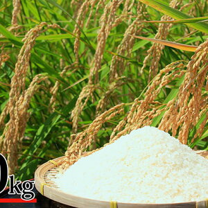 【ふるさと納税】富谷市産 特別栽培米 ササニシキ 10kg 【米・お米・ササニシキ】