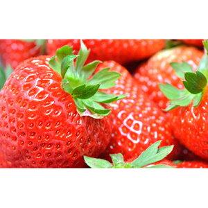 【ふるさと納税】【3月発送】亘理町のいちご もういっこ 270g×4パック <クレジット限定> 【果物詰合せ・フルーツ・果物類・いちご・苺・イチゴ】 お届け:2020年3月1日から3月25日まで