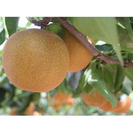 【ふるさと納税】南水 6玉(3L) 【梨・果物・フルーツ】 お届け:2020年10月中旬頃〜11月上旬頃まで出荷予定。