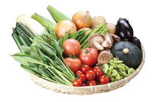 【ふるさと納税】B2701 朝採り新鮮野菜セット