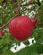 【ふるさと納税】A3201三関りんご3kg満杯詰め