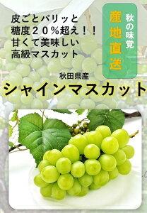 B9906 秋田県産シャインマスカット 1房 家庭用