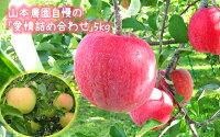 【ふるさと納税】りんご「サンふじ」と「青りんご(黄色系シナノゴールド・ぐんま名月など)」の「愛情箱詰め」5kg【山本農園】