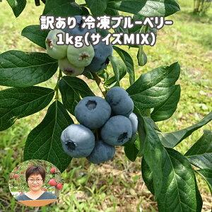 【ふるさと納税】訳あり 冷凍ブルーベリー 1kg(サイズMIX) としま農園