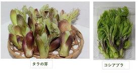 【ふるさと納税】A48197山菜セットA(タラの芽80g×2、コシアブラ60g×2)発送は4月から