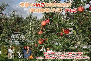 【ふるさと納税】B41427 季節のりんごおまかせBOX(特別栽培りんご) 5kg ぐんま名月、シナノゴールド、とき、森のかがやき