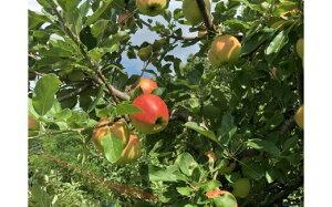 【ふるさと納税】B25337 黒木果樹園のりんご(彩り)5kg 季節の旬のりんごをお届け