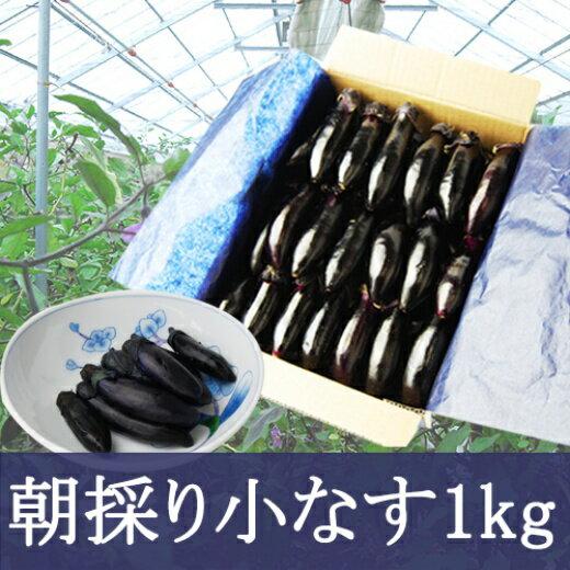 【ふるさと納税】FY19-138 やまがたの朝採り漬物用小なす 1kg(40本前後)