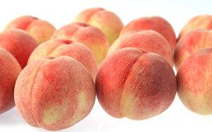 【ふるさと納税】FY19-626【令和2年産先行予約】【白桃】玉うさぎ 3kg