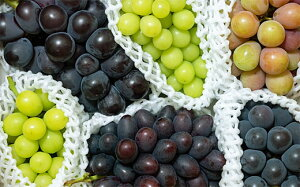 【ふるさと納税】FY19-707【令和2年産先行予約】人気です!山形大粒葡萄の食べ比べセット 2kg