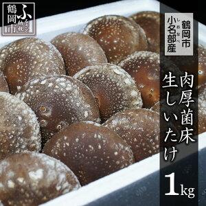 【ふるさと納税】鶴岡市小名部産 肉厚菌床生しいたけ 1kg(500g×2パック)