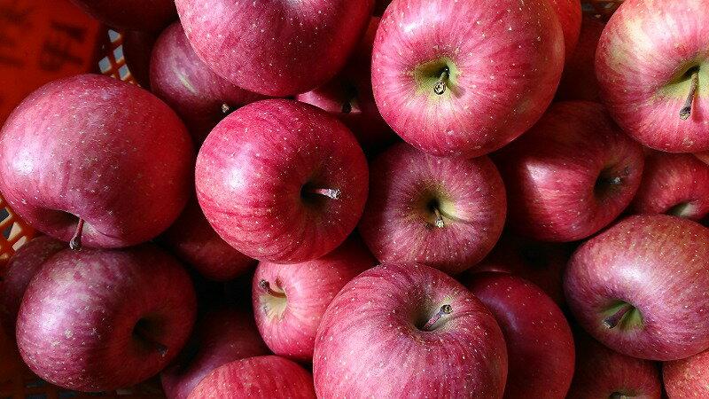 【ふるさと納税】大満足8kg!食べきりサイズの小玉りんご(サンふじ・秀品)