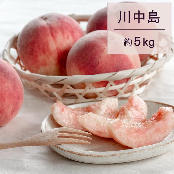 【ふるさと納税】もも(川中島)5kg