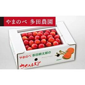 【ふるさと納税】《先行予約》2021年 佐藤錦バラ詰Lサイズ500g 「やまのべ 多田農園」F20A-038
