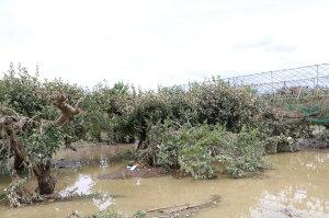 【ふるさと納税】【令和2年7月豪雨災害支援緊急寄附受付】山形県河北町災害応援寄附金(返礼品はありません)