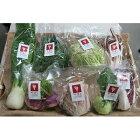 【ふるさと納税】かほくイタリア野菜おまかせBOX