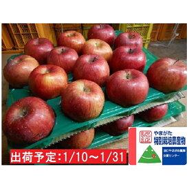 【ふるさと納税】年明け 特別栽培 訳ありサンふじ約10kg 大江町産  【果物類・林檎・りんご・リンゴ】 お届け:2021年1月10日〜2021年1月31日