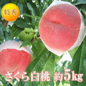 【ふるさと納税】【先行予約】No.0864さくら白桃 5kg 特秀(13〜16玉)