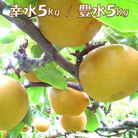 【ふるさと納税】サンシャインいわき梨