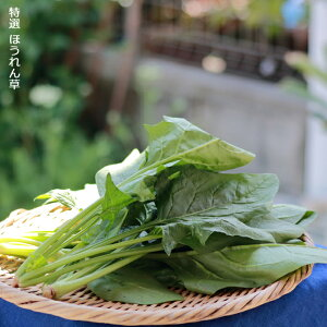 【ふるさと納税】いわき浜の野菜セット(いわき市産の野菜詰め合わせセット)