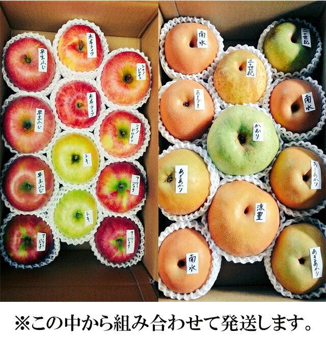 【ふるさと納税】北條農園のりんご・梨味比べ 大箱