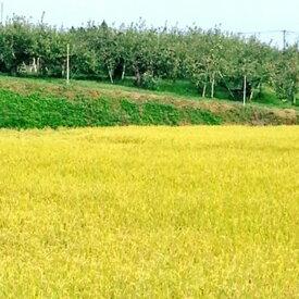【ふるさと納税】北條農園の特別栽培米(コシヒカリ) 5kg