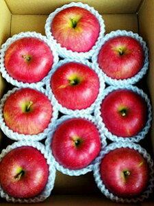 【ふるさと納税】北條農園のりんご【ふじ】 中箱
