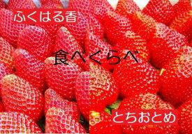 【ふるさと納税】【先行予約】伊賀いちご園のレギュラーパック食べ比べ2P(1パック280g×2品種)(合計2パックお届け)【18003】「ふくはる香」「とちおとめ」イチゴ ストロベリー strawberry