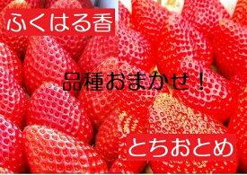 【ふるさと納税】【先行予約】伊賀いちご園のおまかせ2P(1パック280g×2パック)【18005】イチゴ ストロベリー strawberry
