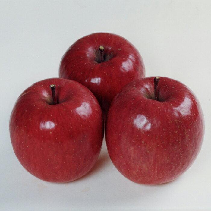 【ふるさと納税】りんご(サンふじ) 5キロ