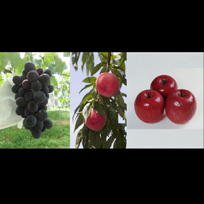【ふるさと納税】桑折季節の果物セット