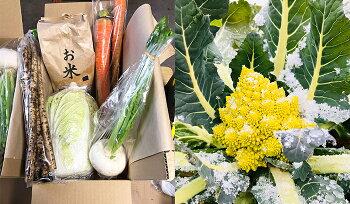 定期便西会津ミネラル野菜セット月1配送×10回(大)