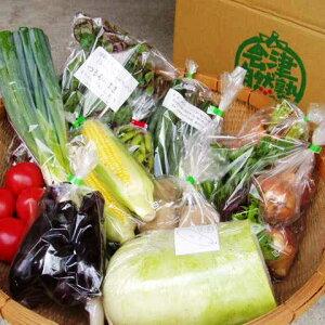 【ふるさと納税】有機野菜セット季節の採れたて有機野菜(7〜8点)を農家から直送