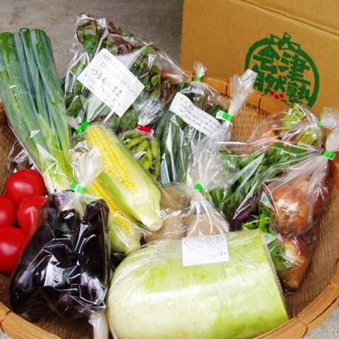 【ふるさと納税】有機野菜セット季節の採れたて有機野菜(7〜8点)を農家から直送※