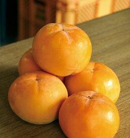 【ふるさと納税】会津美里産 みしらず柿 3.5kg※11月上旬〜11月下旬頃に順次発送予定