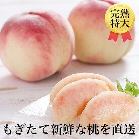 【ふるさと納税】FT18-035 【先行予約商品】契約栽培 桃 約11~16玉(5kg相当)