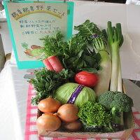 【ふるさと納税】B-8 日立市産 新鮮野菜セット
