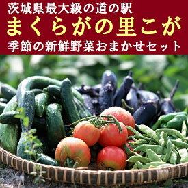【ふるさと納税】BQ02_道の駅まくらがの里こが 季節の新鮮野菜おまかせセット※沖縄、離島への発送不可