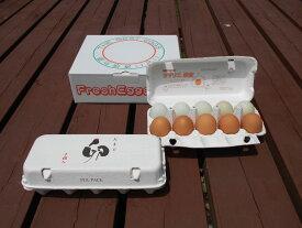 【ふるさと納税】AG09_江原ファーム 地養卵&アローカナハーフセット(計20個)