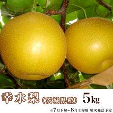 【ふるさと納税】11-2茨城県産「幸水梨」5kg