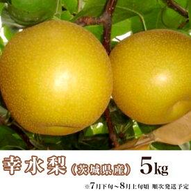 【ふるさと納税】梨 幸水 5kg 先行予約 11-2茨城県産「幸水梨」5kg